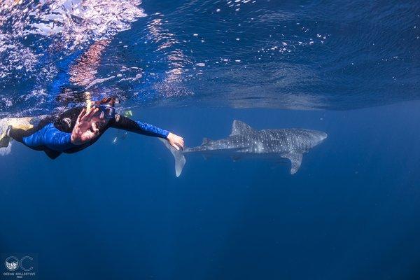 Whaleshark Diving