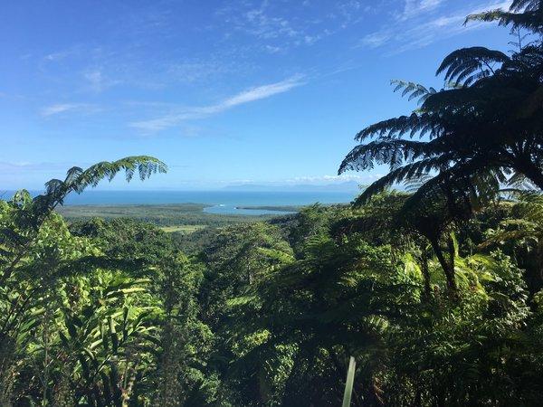 Dschungel Cairns