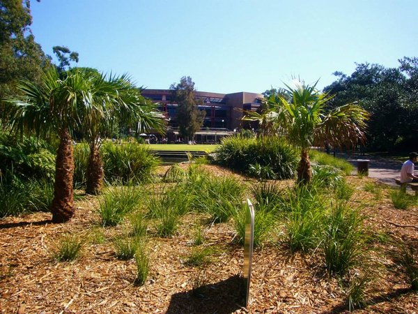 Der Wollongong University Campus